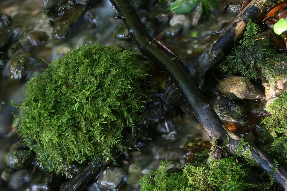 Bach, Moss, Water, Nature, Green, Source, Bubble