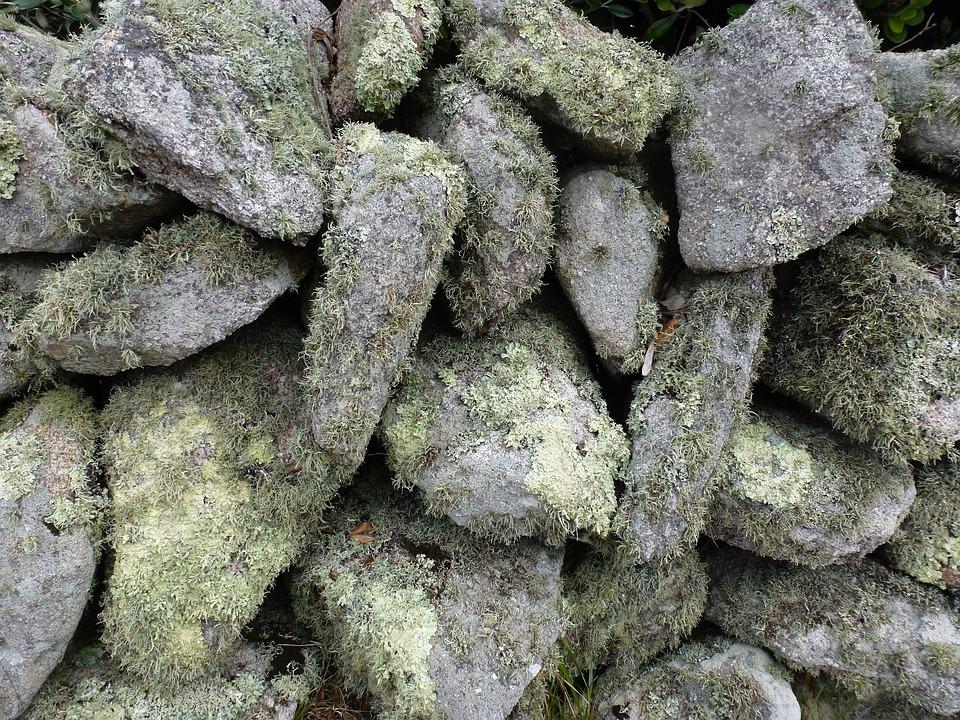 Lichen, Stone, Texture, Moss, Textured