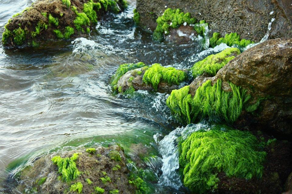 Moss, Stone, Marine, Nature, The Stones Are, Water