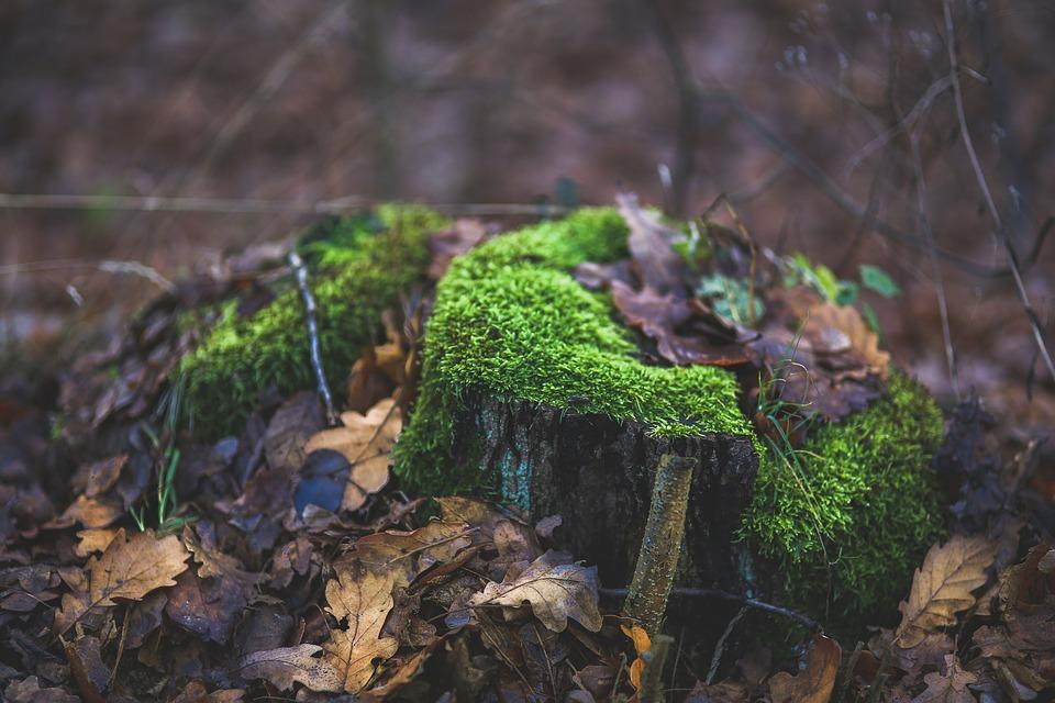 Moss, Tree, Trunk, Stump, Forest, Green, Fall, Autumn