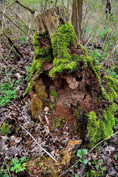 Tree, Forest, Moss, Green, Nature, Wood, Forests
