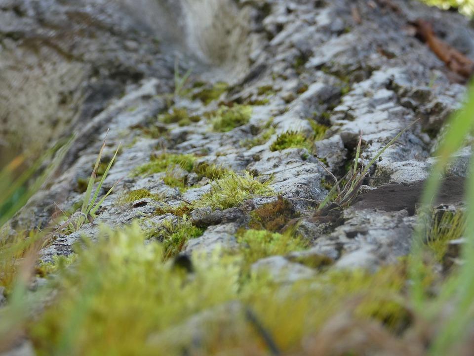 Moss, Tree Trunk, Wood, Tree, Bark, Trunk, Nature
