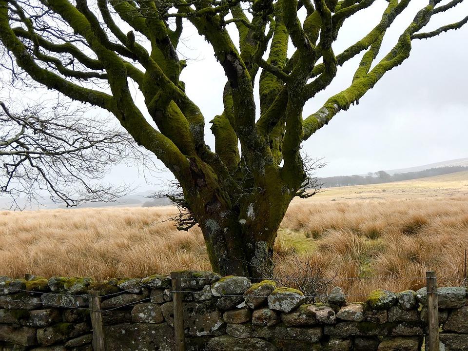 Tree, Moss, Dartmoor, Winter, Wild, Wildlife Park