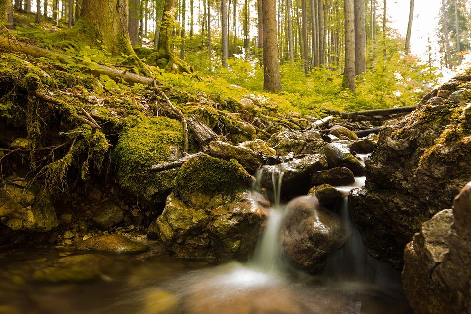 Forest, Rocks, Stream, Moss, Trees, Nature, Cascades