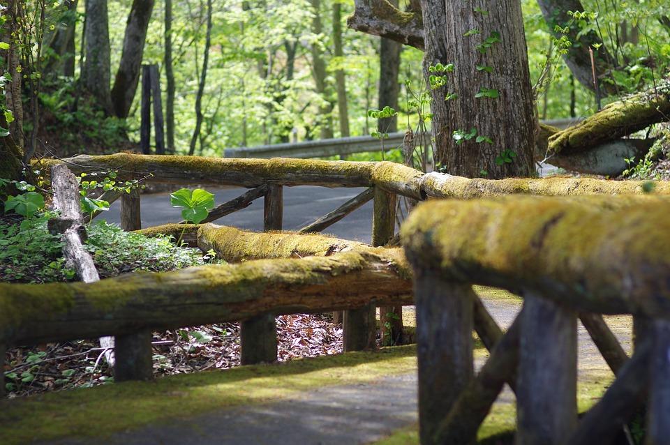 Wooden Path, Mossy, Handrail