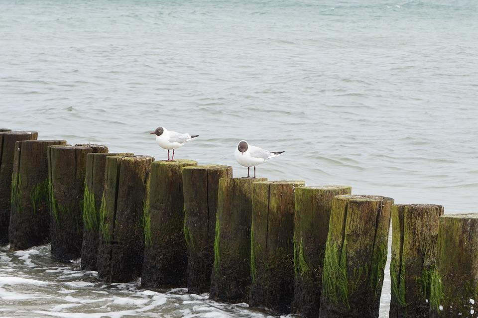 Waters, Sea, Coast, Beach, Most Beach, Sand, Baltic Sea