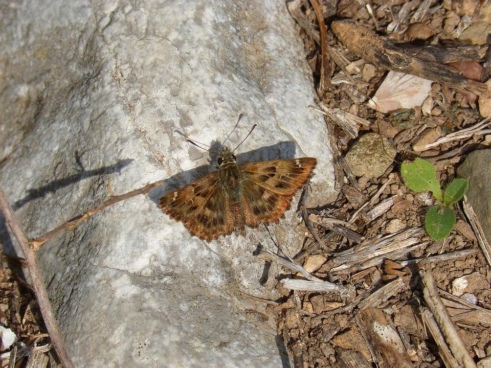 Butterfly, Stone, Detail, Macro, Moth, Summer, Park