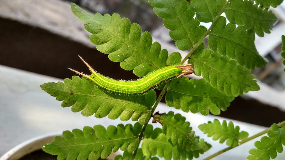 Caterpillar, Green, Nature, Insect, Creature, Moth