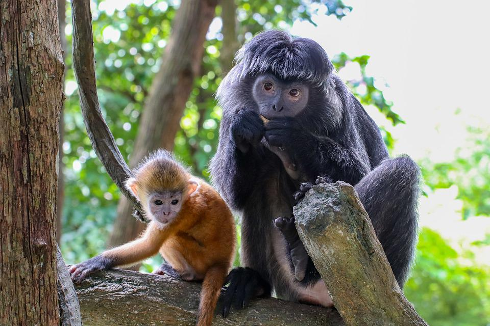 Monkey, Family, Young, Mother, Baby, Hairy, Primates