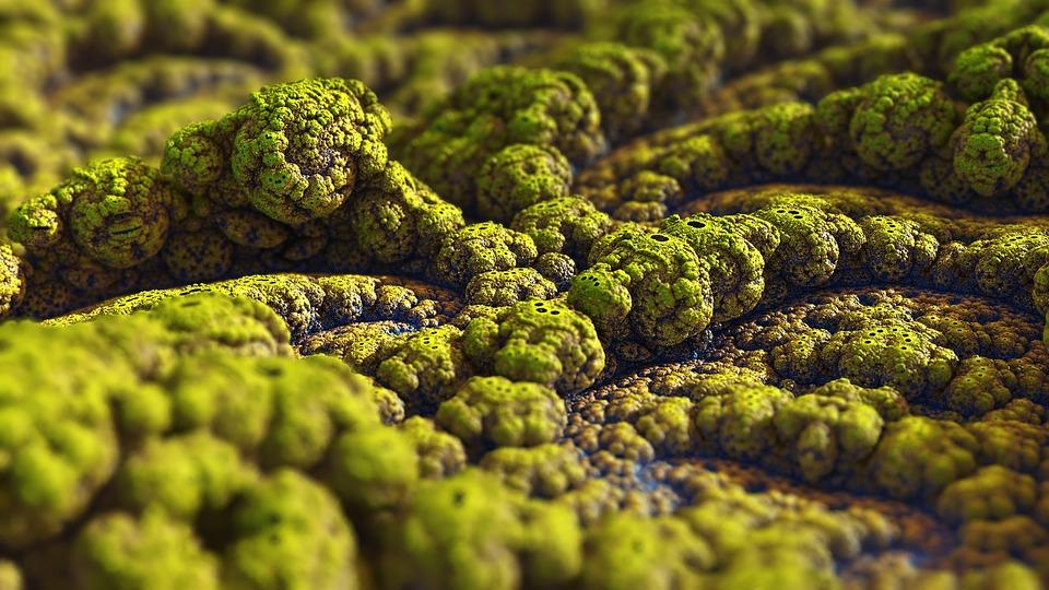 Mould, Organic, Fractal, Design, Creation, Mold, Fungus