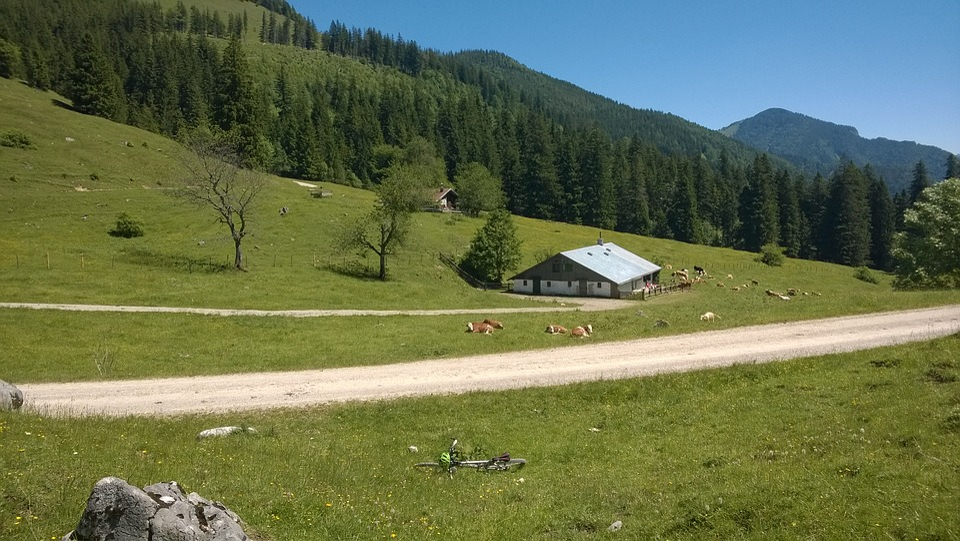 Alm, Mountain Bike, Nature