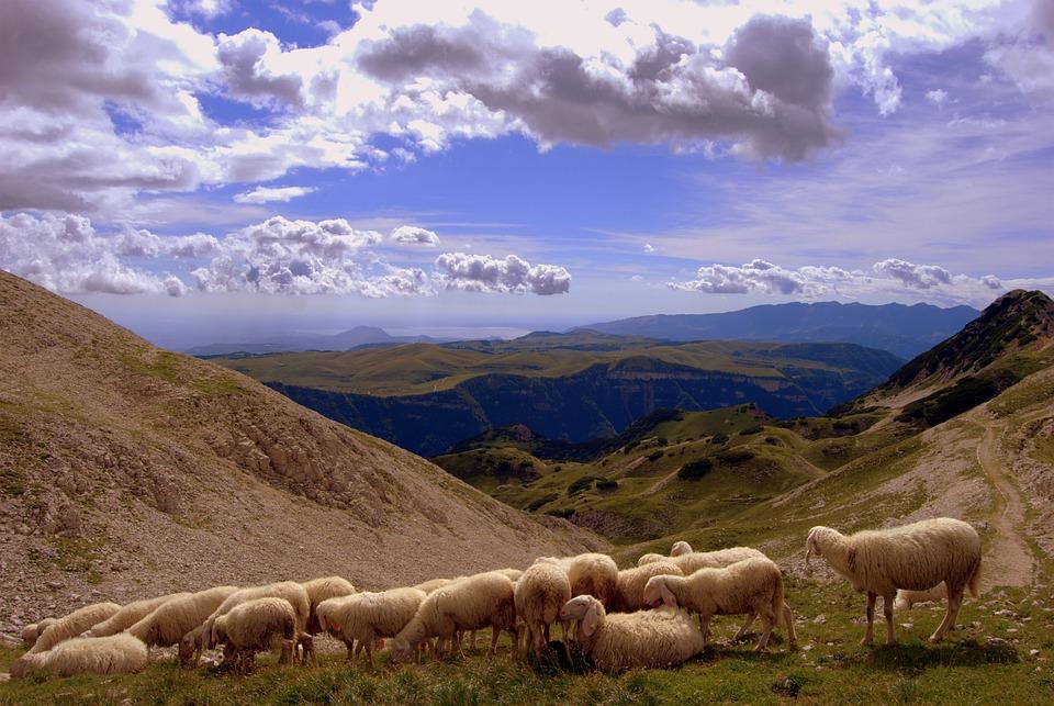 Flock, Landscape, Mountain, Animal, Clouds, Sheep