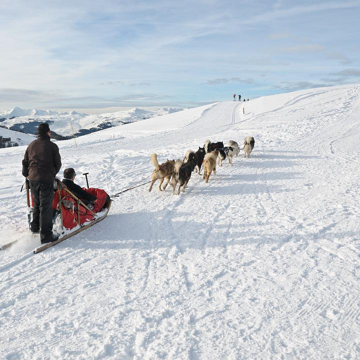 Dog, Sled, Snow, Mountain