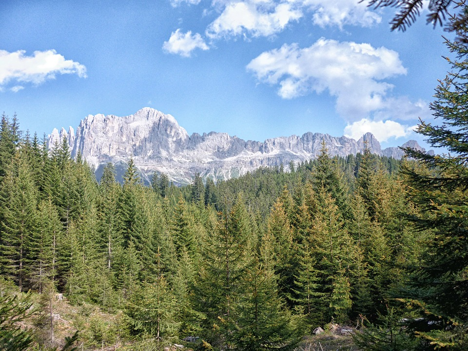 Dolomites, Trees, Mountain, Forest, Landscape
