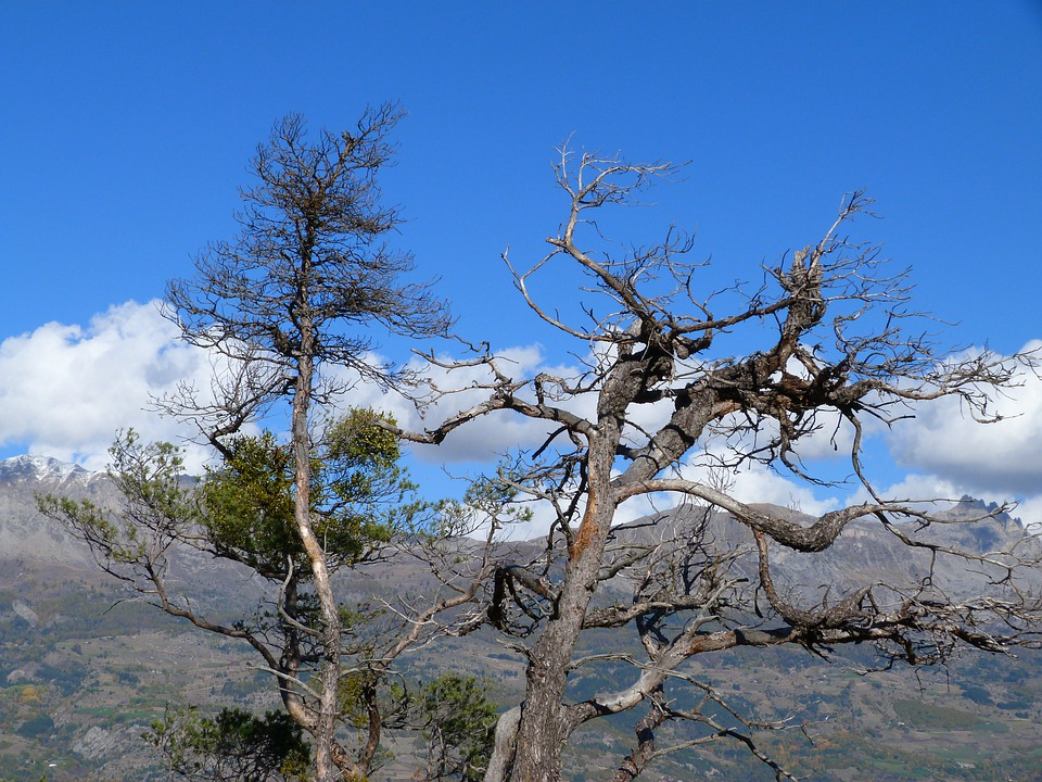 Tree, Branches, Nature, Landscape, Mountain, Dry