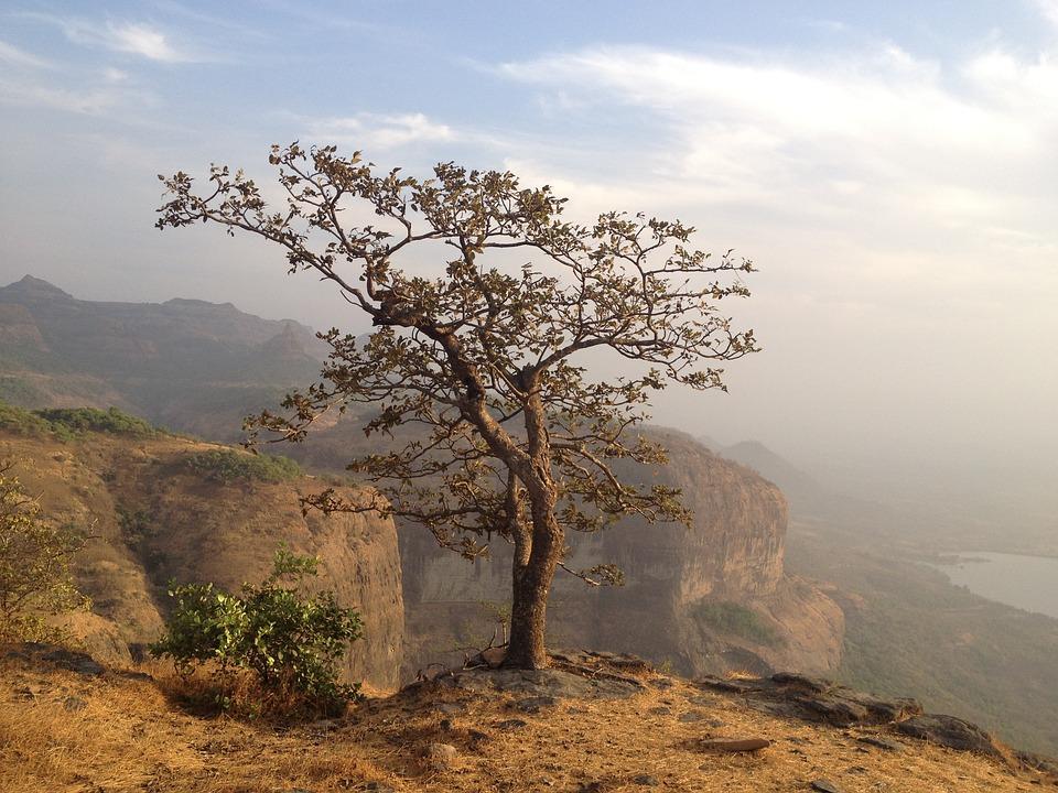 Tree, Mountain, Cliff Edge, Cliff, Nature, Edge