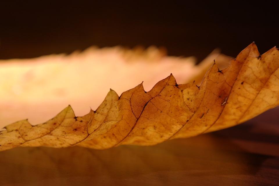 Elm Leaf, Edge, Perforation, Mountain Elm, Elm Leaves