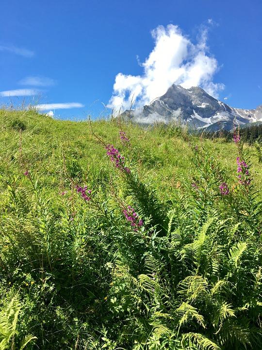 Mountain Meadow, Mountain Flower, Clouds, Landscape