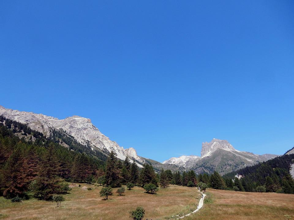 Larch, Mountain, Alps, Trail, Mount Thabor, Forest