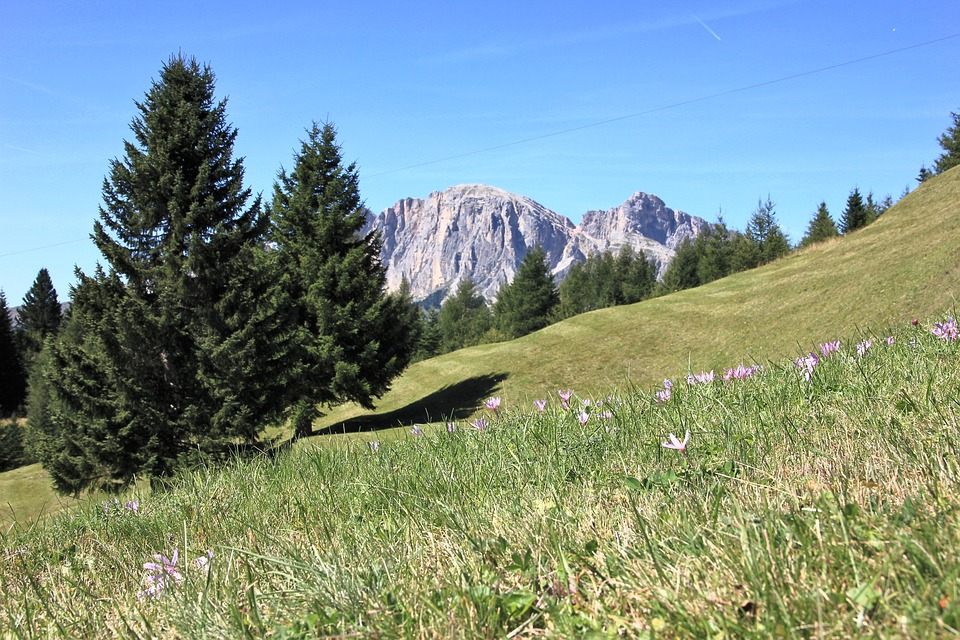 Landscape, Nature, Tree, Grass, Mountain, Meadow