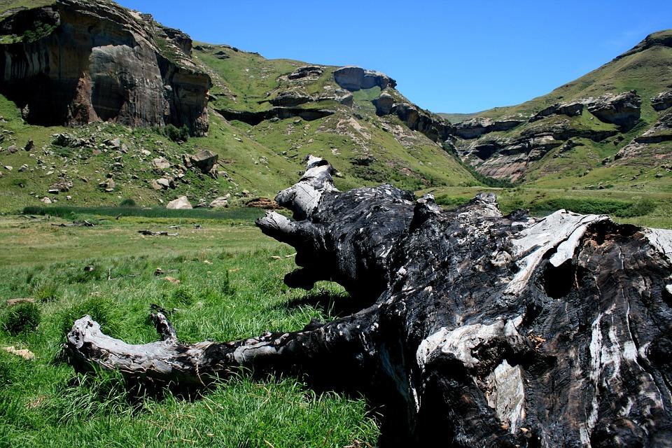 Landscape, Mountain, Green Grass, Rocks, Tree Stump