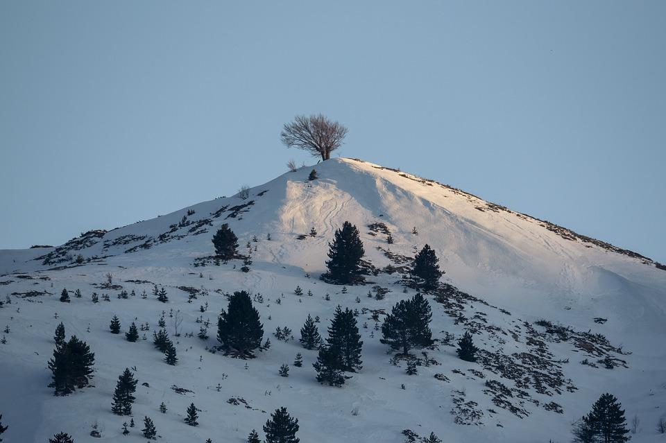 Top, Mountain, Peak, Tree, Hiking, Adventure, Landscape