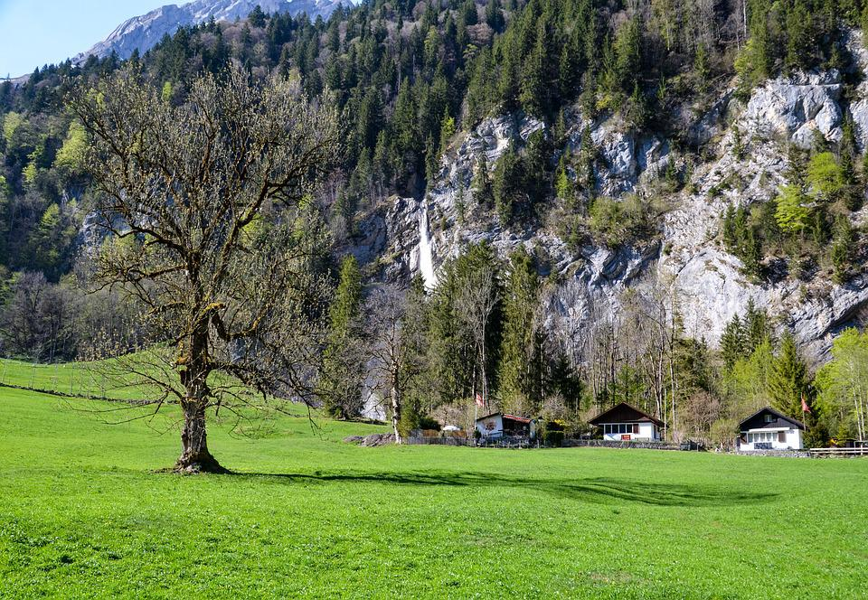Tree, Nature, Grass, Chalet, Mountain Huts, Landscape