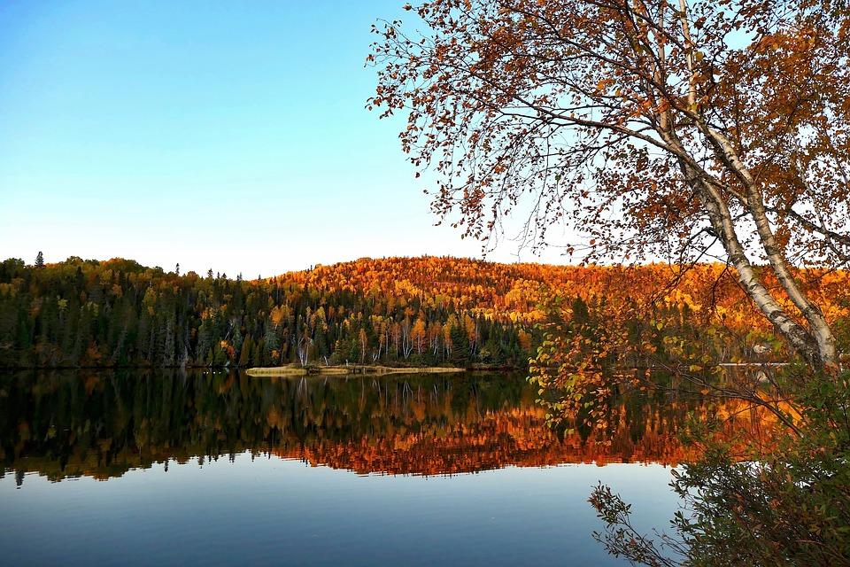 Landscape, Nature, Trees, Scenic, Mountain, Green