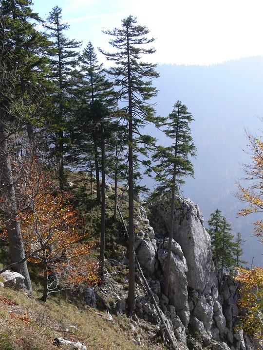 Landscape, Fir, Mountain, Trees, Nature, Switzerland