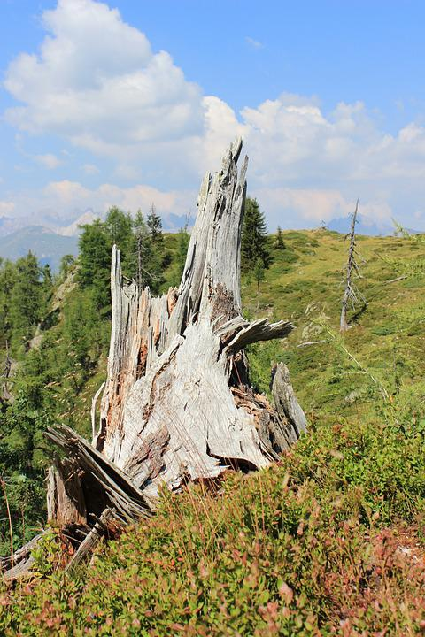 Tree Stump, Mountain Landscape, Vermoderndes Wood