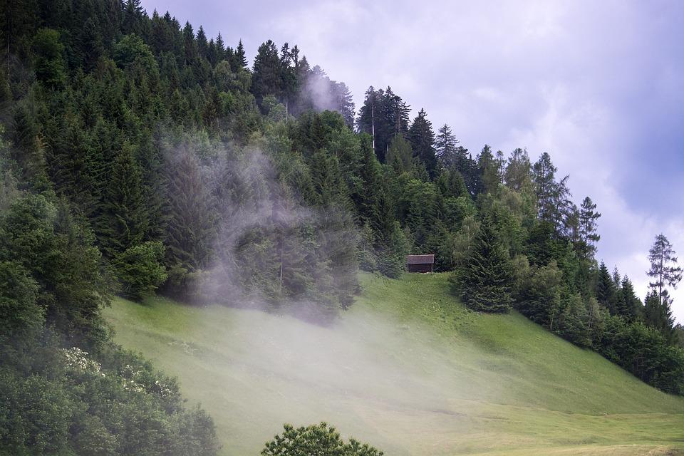 Landscape, Nature, Meadow, Mountain Meadow, Trees