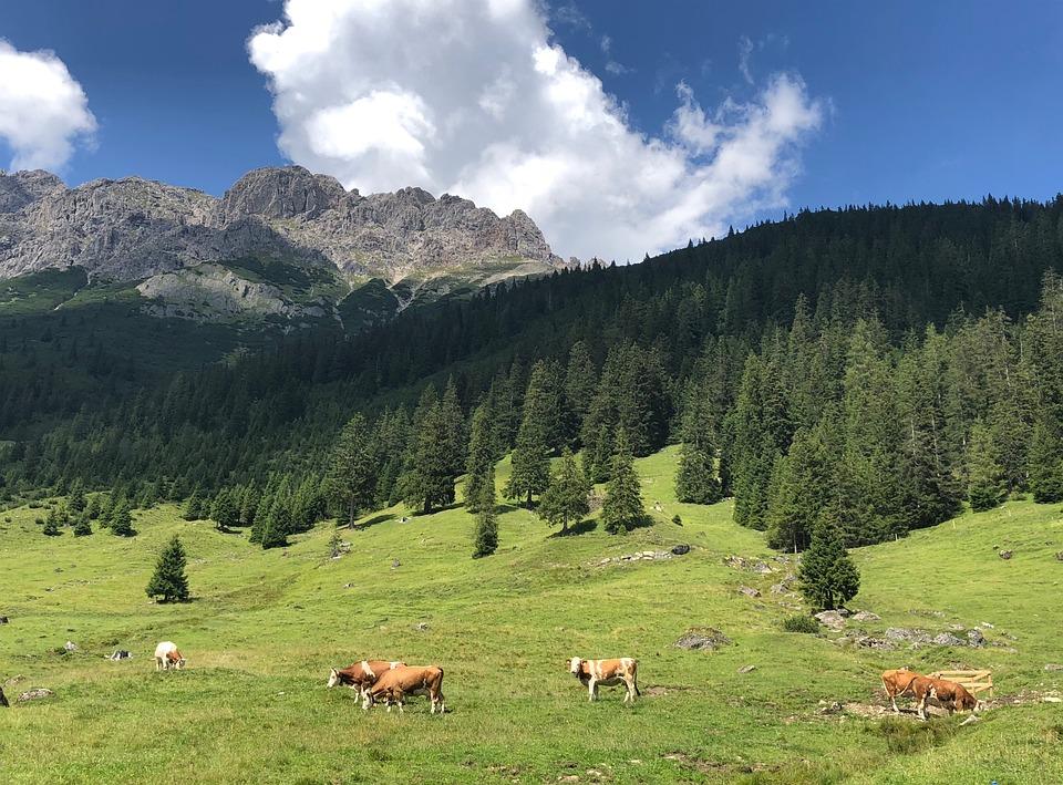 Alps, Panorama, Nature, Mountains, View, Mountain, Rock