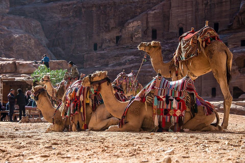 Jordan, Petra, Camel, Dromedary, Desert, Mountain