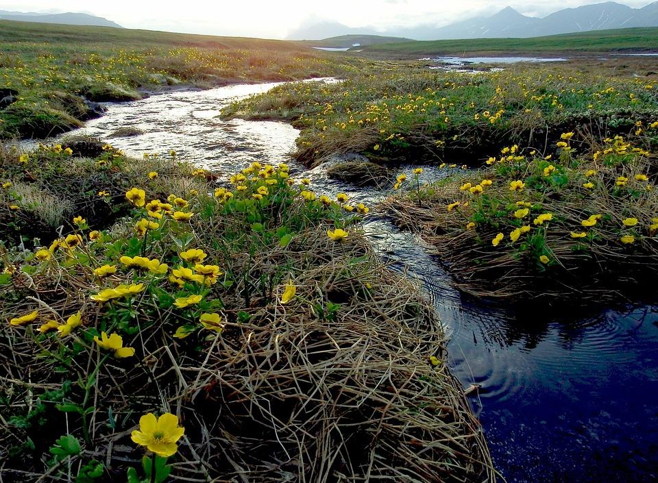 Creek, Mountain Plateau, Flowers, Evening, Mountains
