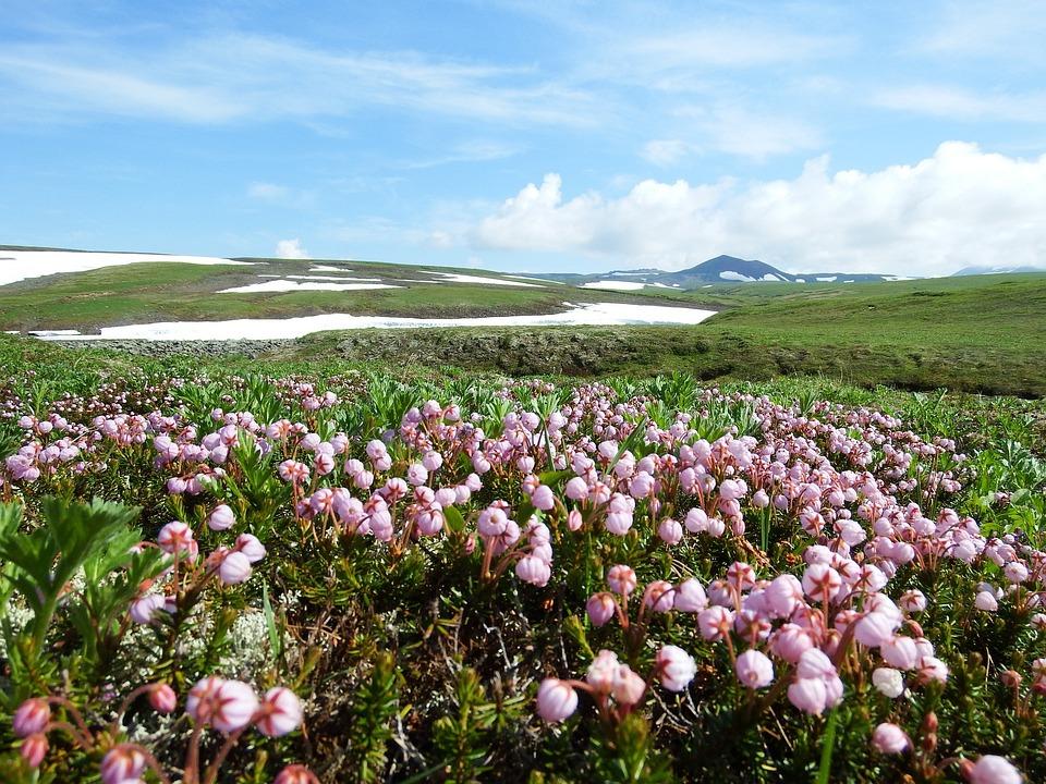 Creek, Mountain Plateau, Flowers, Snow, The Snow