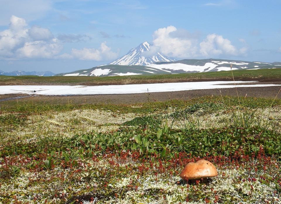 Kamchatka, Mountain Plateau, Mushroom, Tundra, Volcano