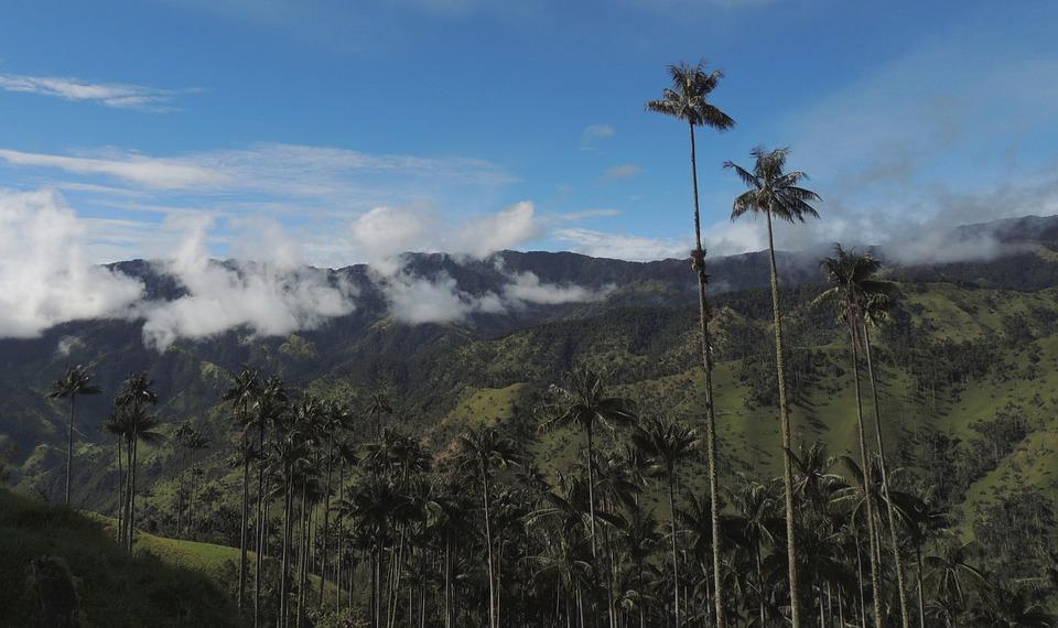 Landscape, Mountain Ranges, Wax Palms, Trees, Mountains