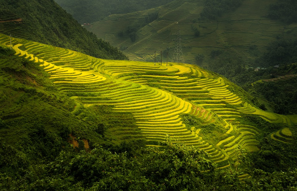 Sa Pa, Paddy Field, Season, Mountain