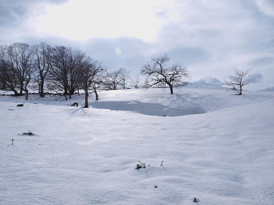Snow, Christmas, Park, Nature, Cold, Winter, Mountain