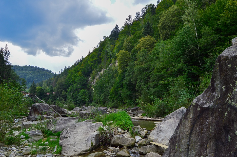 Forest, Sky, Landscape, Nature, Trees, River, Mountain