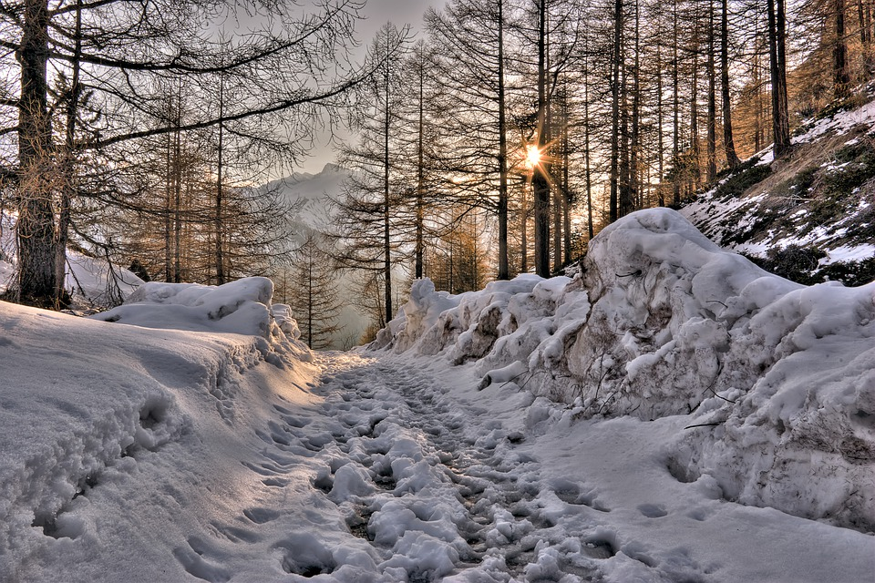Mountain, Path, Forest, Snow, Spring, Thaw, Trees