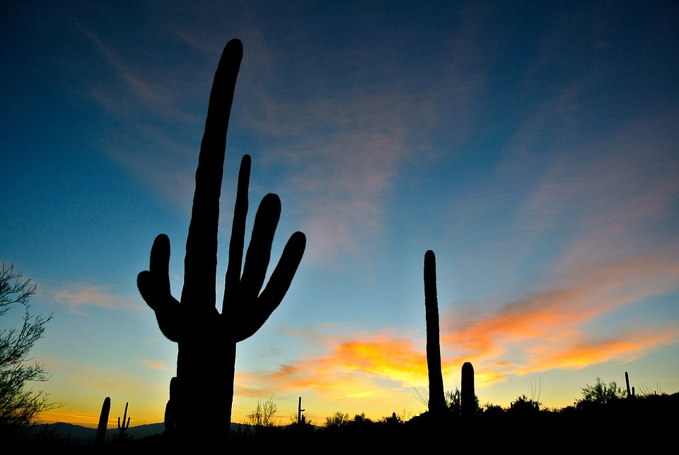 Arizona, Sunrise, Nature, Landscape, Cactus, Mountains