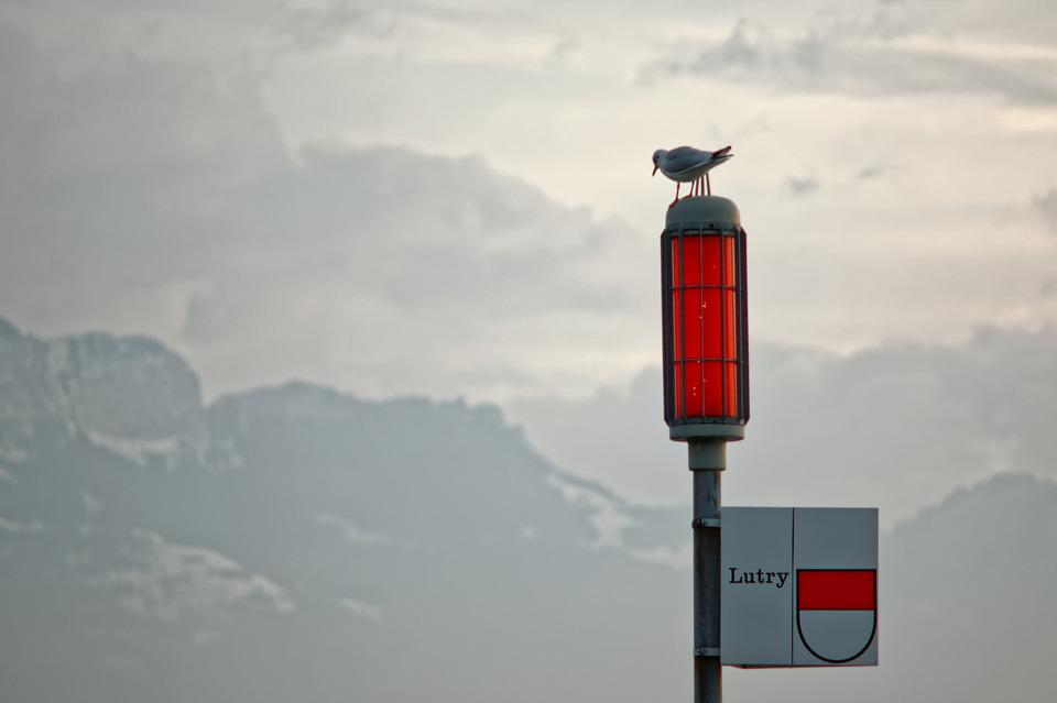 Red, Signal, Geneva, Lake, Bird, Fire, Mountains, Ouchy