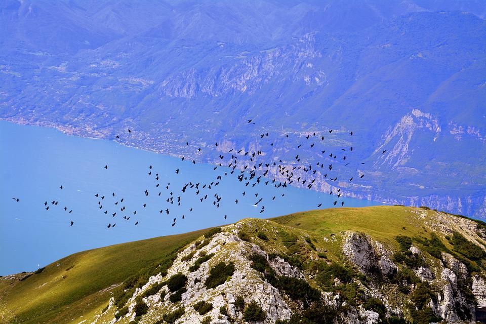 Birds, Flock, Mountains, Lake, Garda, Baldo