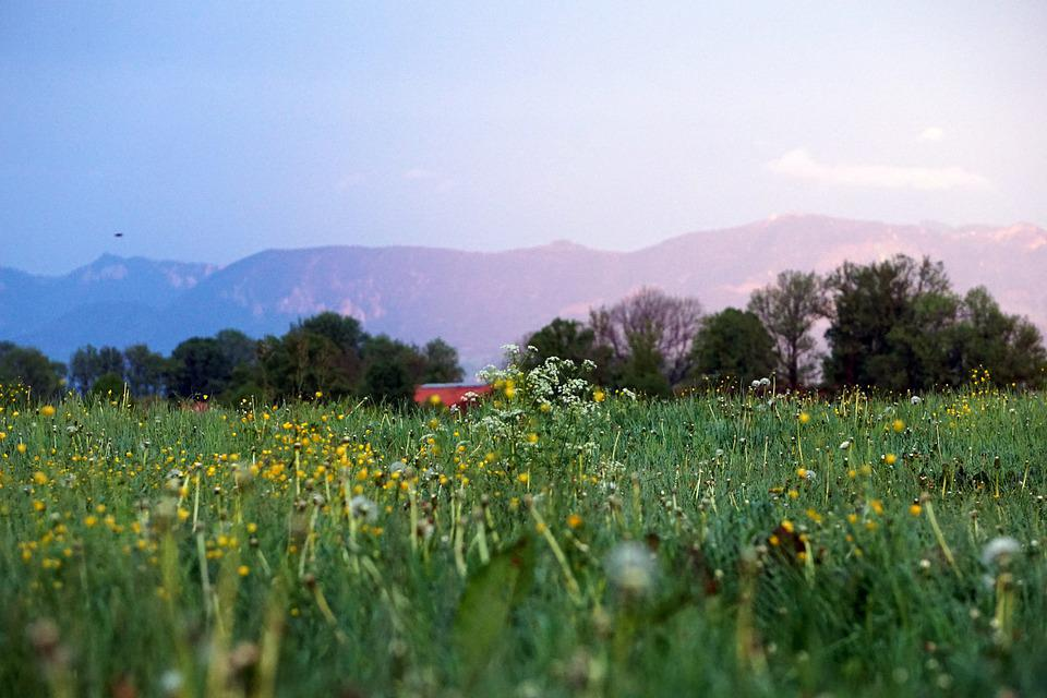 Flowers, Meadow, Grass, Mountains, Alps, Colors
