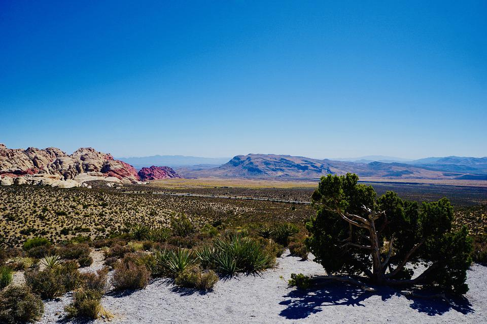 Desert, Cacti, Desert Land, Mesa, Mountains, Landscape