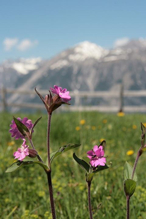 Plant, Flowers, Purple, Nature, Fence, Mountains