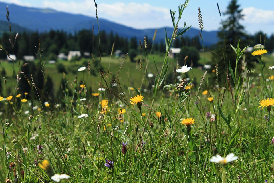 Haymaking, Plants, Nature, Mountains, Horizon, Summer