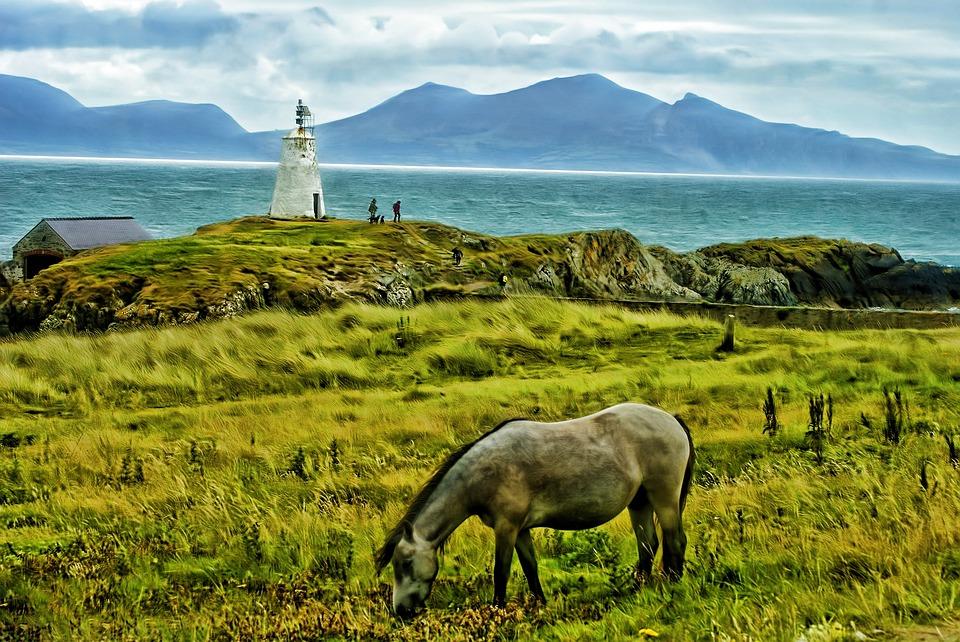 Horse, Field, Animal, Mountains, Mountain, Landscape