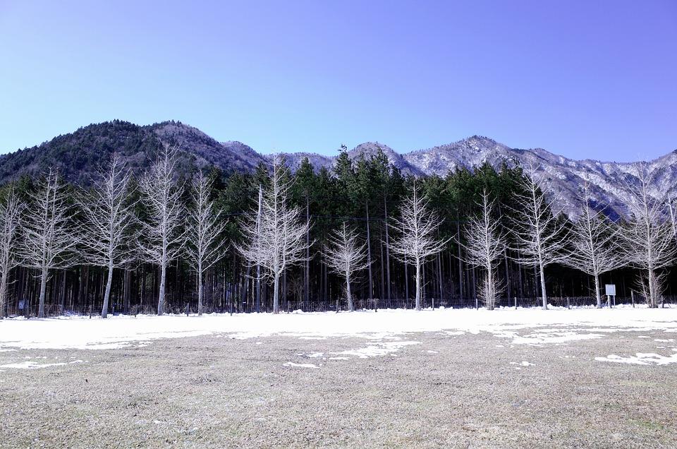 Winter, Wood, Foot Cum I Et Al, Landscape, Mountains